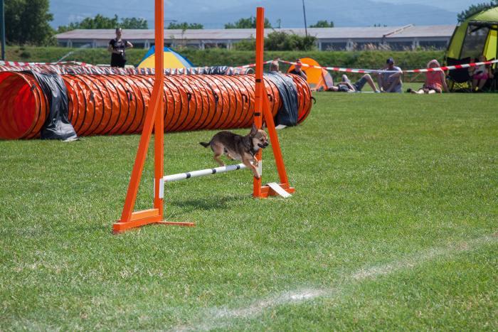 agility 1