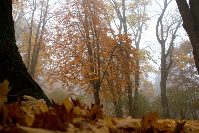 jesen_dusicky_05