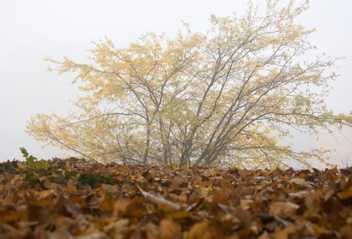 jesen_dusicky_07