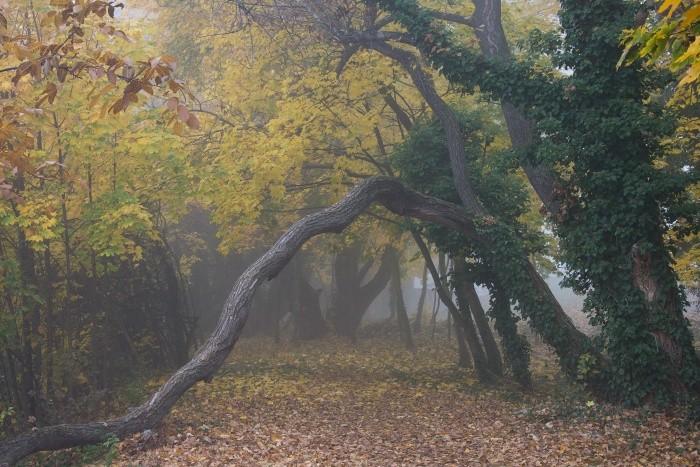jesen_dusicky_08