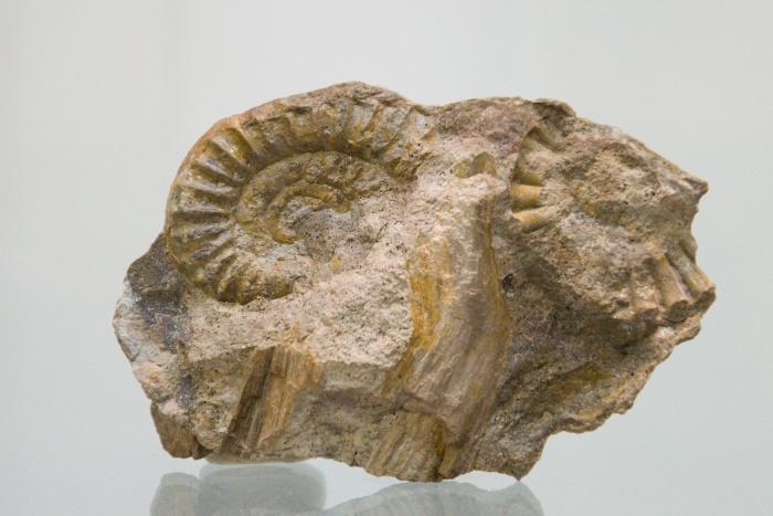 paleobotanika 1