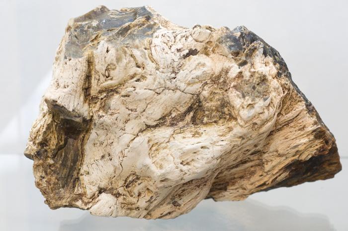 paleobotanika 3