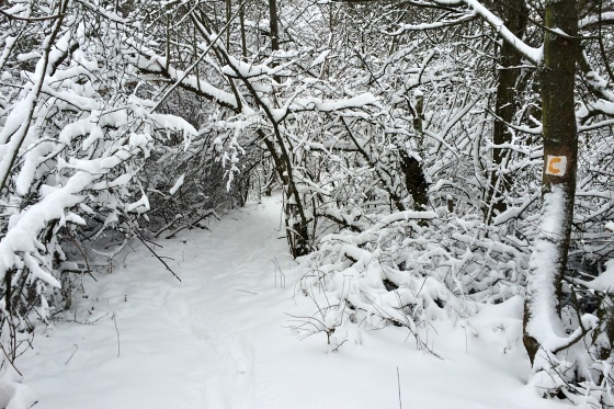 sneh piestany foto slavo tomik 4
