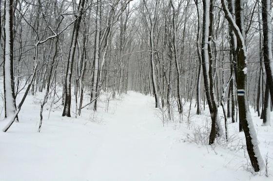 sneh piestany foto slavo tomik 6