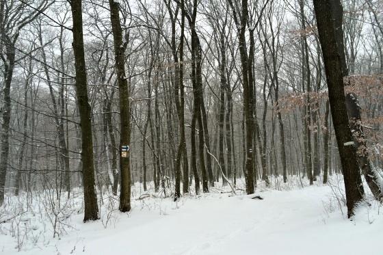 sneh piestany foto slavo tomik 7