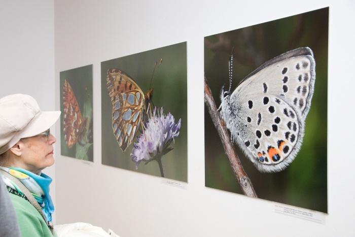 tibensky motele vystava 4