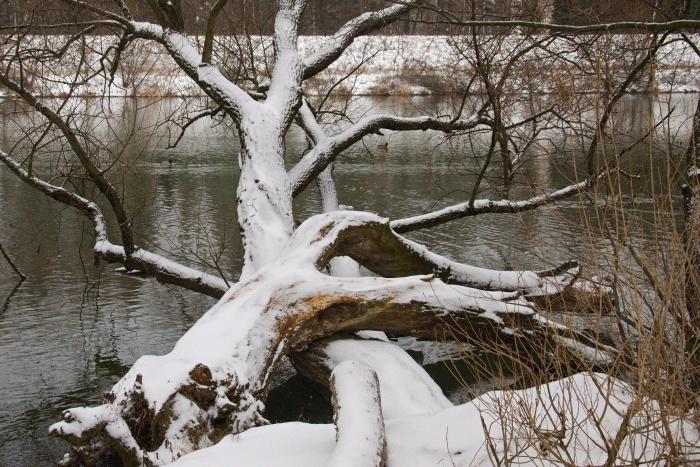 zima sneh 11