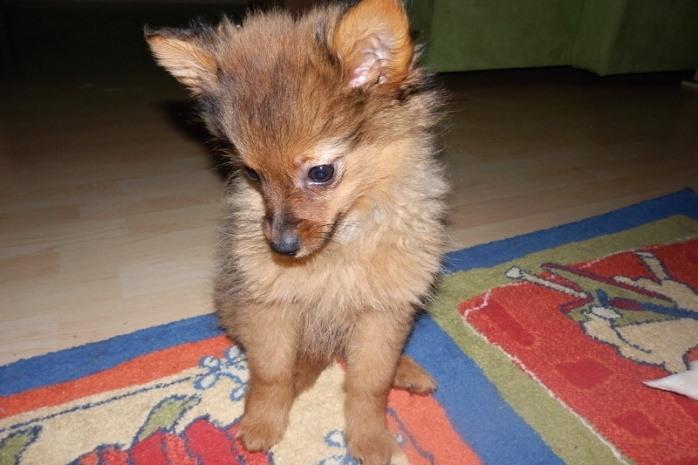 fox4_resize