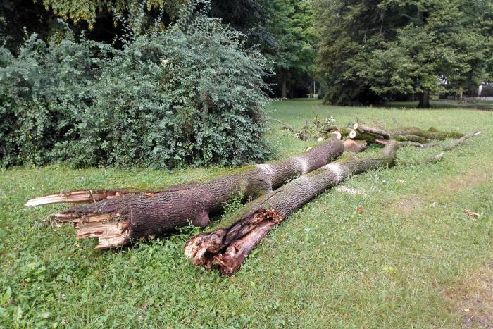 padnuty strom park