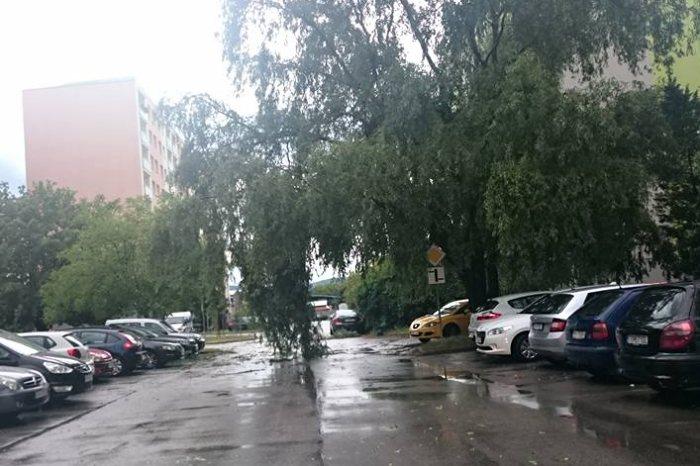 padnuty strom scherera