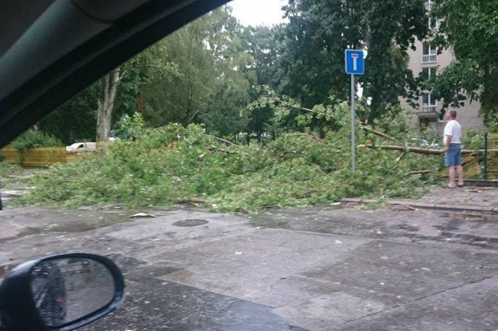 padnuty strom